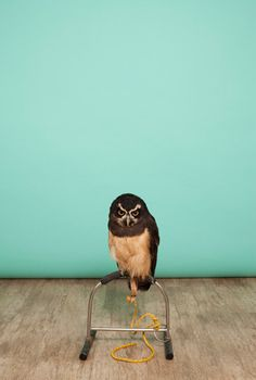http://www.itsnicethat.com/articles/luke-stephenson-owls