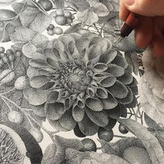 Dotted Drawings, Art Drawings Sketches, Drawing Designs, Realistic Flower Drawing, Flower Drawings, Drawing Flowers, Plant Drawing, Painting & Drawing, Pointillism Tattoo