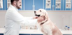 his is because brown vomit from your dog can indicate some serious issues that should only be diagnosed and treated by a trained professional. The majority of brown vomitus in dogs comes from a source of blood, although the source itself can vary, so having your pup checked out thoroughly is the best course of action. Some known reasons for brown dog vomit include: Ulcers in the stomach and digestive tract Just like us humans, dogs can develop ulcers through stress, poor health and sometimes… Throwing Up Bile, Dog Throwing Up, Different Types Of Dogs, Brown Dog, Dog Eating, Dog Owners