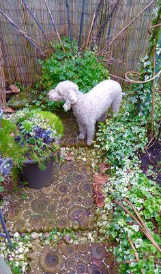 Rupert waiting for spring