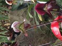 Orquideas! Una de nuestras favoritas