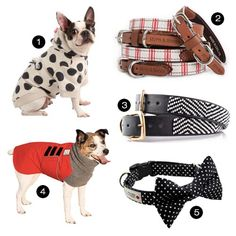 Dog Milk Holiday Gift Guide: 30+ Stylish Dog Clothes, Collars, and Leashes - Dog Milk