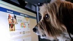How to Curate Your Facebook News  Read More Here:http://on.mash.to/1f3j0n4