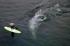 SUPing with whales!