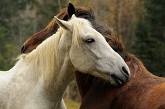 Natural remedies for horses