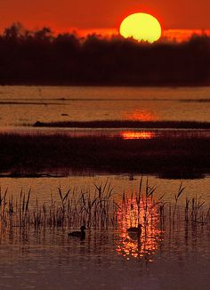 //Summer Morning Ducks