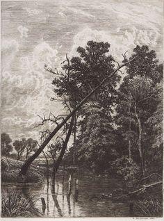 Ivan Shishkin A swamp Иван Иванович Шишкин.  Болото.  1892.