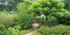 Afbeeldingsresultaat voor wilde groene tuinen