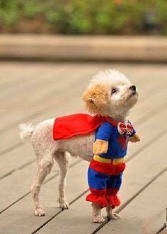 101 mascotas   disfraces para perros: 6 disfraces super tiernos para perros pequeños