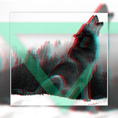 Graphic design by me. Wolf with glitch effect. Adobe Photoshop
