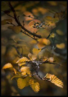 Deciduous Trees, Antarctica, Tasmania, Nature Photos, Continents, South America, New Zealand, Fairies, Theory