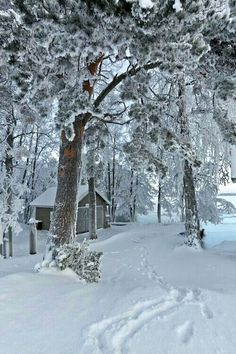 I am so ready for some warm weather and I continue to pin the beautiful winter scenes.   I must stop NOW!