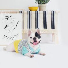 Cn /_ Eg /_ Lindo Mascota Perro Cachorro Huella de Diseño Algodón Suave Jersey