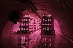 Huerto subterraneo hidroponico  en un antiguo refugio de la II Guerra  Mundial en Londres, Growing-underground.com