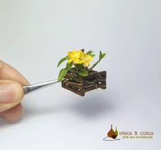 Orchid Cattleya Blc