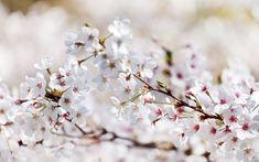 : spring tree