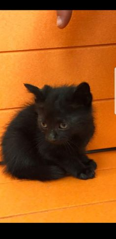 yesterday, for the first time , a street cat let me pet it , it was a black small cat just like this one but with less fur