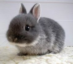 Awesomely cute bunny and awesomely funny story to go with it, too!