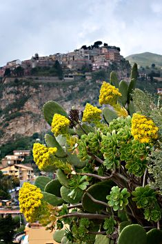 Have your camera ready because in Taormina you'll see medieval mansions, Gothic ruins, charming homes adorned with flower boxes and more! Catania Sicily, Cruise Destinations, Cruise Port, Shore Excursions, Flower Boxes, Walking Tour, Cruises, Vacation Spots, Medieval