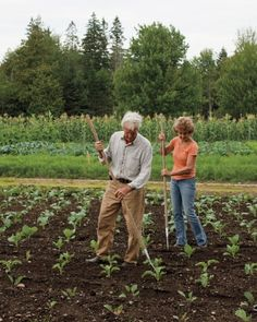 Four Seasons Organic Farm