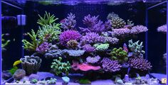 - Page 39 - Reef Central Online Community Saltwater Aquarium Setup, Coral Reef Aquarium, Saltwater Fish Tanks, Marine Aquarium, Marine Fish Tanks, Marine Tank, Reef Aquascaping, Amazing Aquariums, Reef Tanks