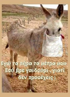 Greek Memes, Greek Quotes, Lol, Sweets, Humor, Sayings, Funny, Animals, Funny Humor Quotes