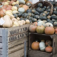 Organic vegetable stand. Yum! Fall's veggies are the best: squashes, gourds, pumpkins. The various dish possibilities are endless.