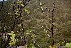 M   o    m    e    n    t    s    b    o    o    k    .    c    o    m: Αχ και να έβρεχε αγάπη! Nature, Painting, Naturaleza, Painting Art, Paintings, Nature Illustration, Painted Canvas, Off Grid, Drawings