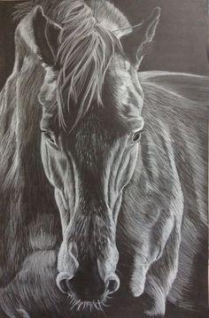Dessin cheval  Crayon blanc sur fond noir