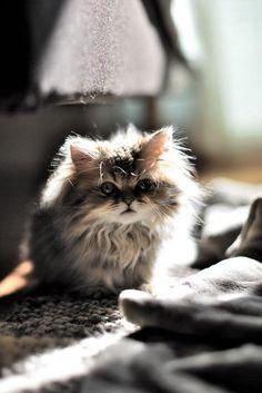 Fluffy baby