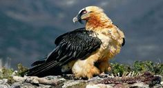 Vultures Successfully Bred in Hyderabad Zoo - Deep Jungle Home Blog