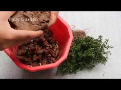 Planting flowers in pots ideas, garden ideas small,small narrow garden i. Small Narrow Garden Ideas, Bonsai Art, Small Small, How To Dry Basil, Planting Flowers, Pots, Herbs, Make It Yourself, Herb