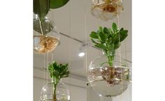 How to Care for Hanging Plants | Wayfair