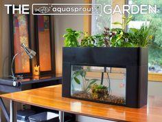 DIY Indoor Aquaponics Fish Tank Ideas 5