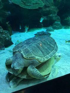 Malaysia Truly Asia, Turtle, Animals, Tortoise, Animaux, Animal, Animales, Turtles, Sea Turtles