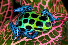 Amazing Frog Photo