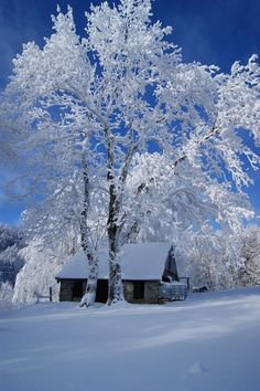Winter Wonderland.Inverno