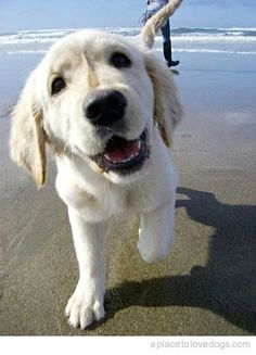 Happiness is a walk at the beach!