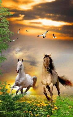 White & Brown Horses Running On Pink Flowers Wall Art - Canvas Wall Decor Cute Horses, Pretty Horses, Horse Love, Horse Photos, Horse Pictures, Beautiful Creatures, Animals Beautiful, Animals And Pets, Cute Animals
