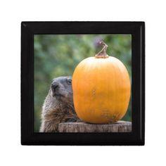 Groundhog Pumpkin Peekaboo Keepsake Box - Halloween happyhalloween festival party holiday