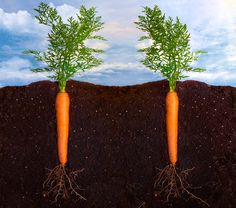 #Garden #Soil: Do Amendments Need To Be Added?