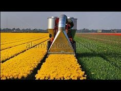 Awesome flower machine - new heavy technology machine - best agricultura...