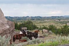 wild horses in North Dakota