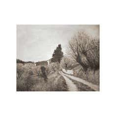 EARLIEST SPRING IN VERNALESE / Tuscany Landscape Canvas Prints