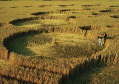 crop circles in land
