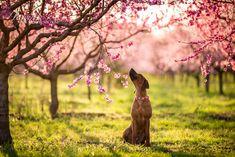 Broskový sad Dog Photography, Road Trip, Sad, Dogs, Animals, Animales, Animaux, Road Trips, Pet Dogs