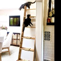 This is a really cool idea to take a reclaimed latter and make it so cats and climb, this could be a cost saving waying to create the cat levels in the office Cat Run, Cat Activity, Cat Playground, Cat Shelves, Pet Clothes, Dog Clothing, Sisal Rope, Dog Clothes Patterns, Cat Enclosure