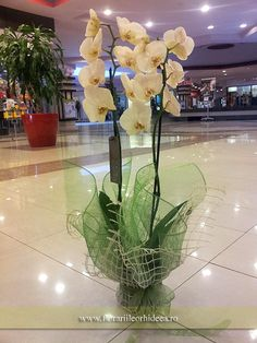 Orhidee phalaenopsis alba la ghiveci Glass Vase, Decor, Plant, Decoration, Dekoration, Inredning, Interior Decorating, Deco, Decorations