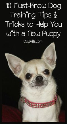 Looking for the best dog training tips and tricks to help you with a new puppy? Check out 10 fabulous ideas every pet parent needs to know!