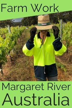 Finding Farm Work in Margaret River - a guide for backpackers Travel Advice, Travel Guides, Travel Tips, Budget Travel, Travel Destinations, Western Australia, Australia Travel, Margaret River Australia, Working Holidays